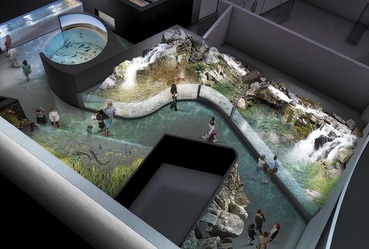 aquarium de canet 66 atelier pous